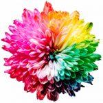 Tipps für Ihren Farbdruck – Buchprojekt clever anlegen